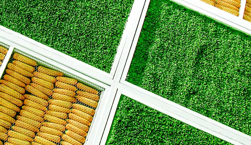 artistic artificial grass in square formation