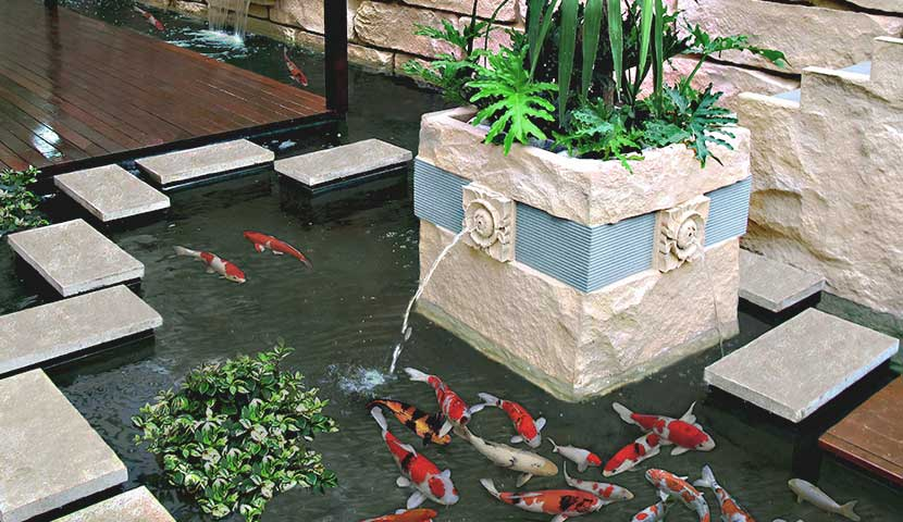 outdoor koi ponds with water feature